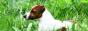 Порода: Джек Рассел терьер ВЕРТУС БЕСТ ГОДСЕНД ЛАНД К </body> </html>