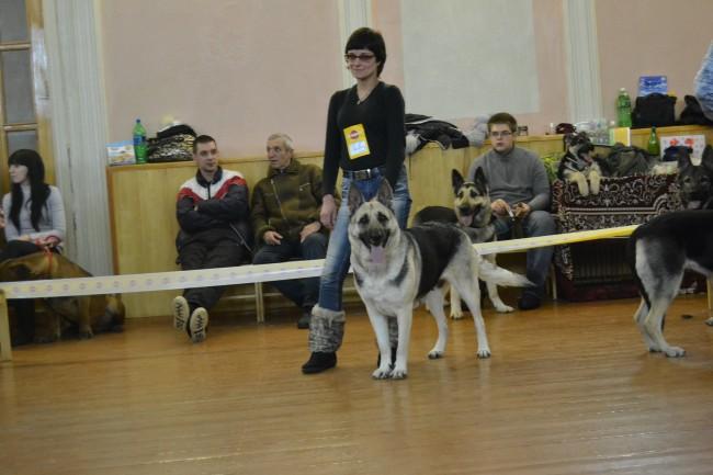 ВОСТОЧНО-ЕВРОПЕЙСКАЯ ОВЧАРКА ВЕЗУВИЙ ЛЕТИЦИЯ (2-12-2017 Ляля ушла от нас...) 4315