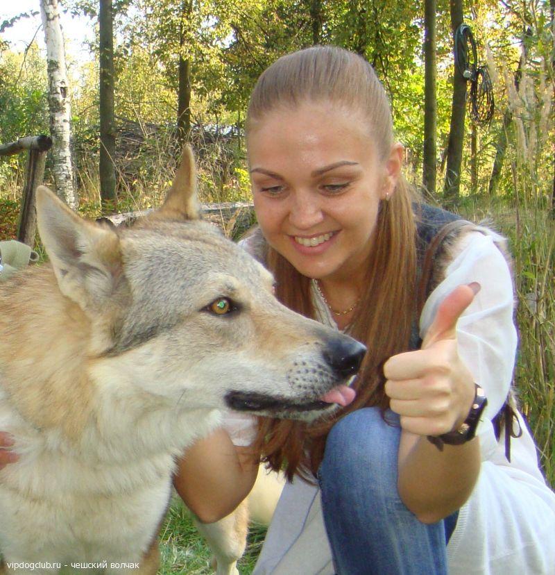 собак скрещенных с волками